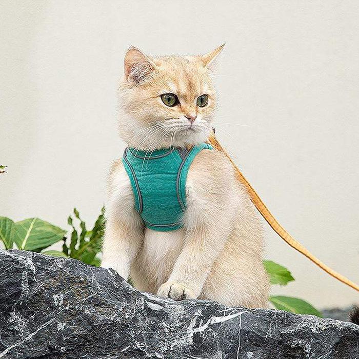 Pentru siguranța pisicii dumneavoastră image